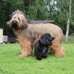 Fotos Hundeplatz 27.08.2011 005